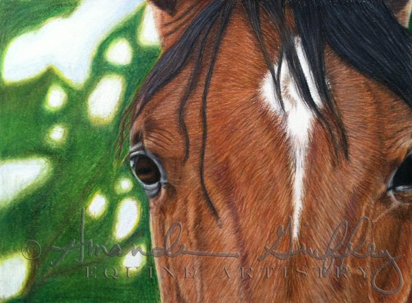 Brown Eyed Girl Colored Pencil Drawing