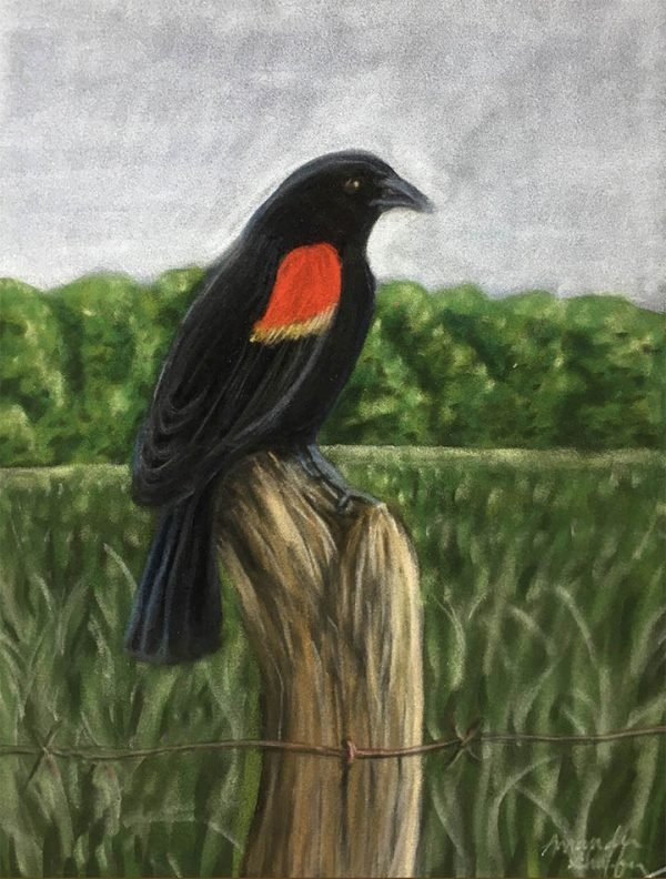 red winged blackbird sitting on old wood post